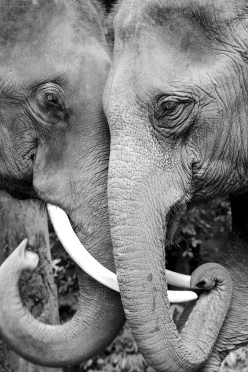 Wildtierhandel – ein globaler Weckruf